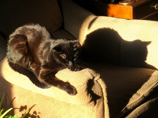 A Cat and his Shadow