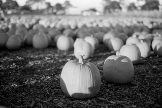 Pumpkin | by tercrossman87