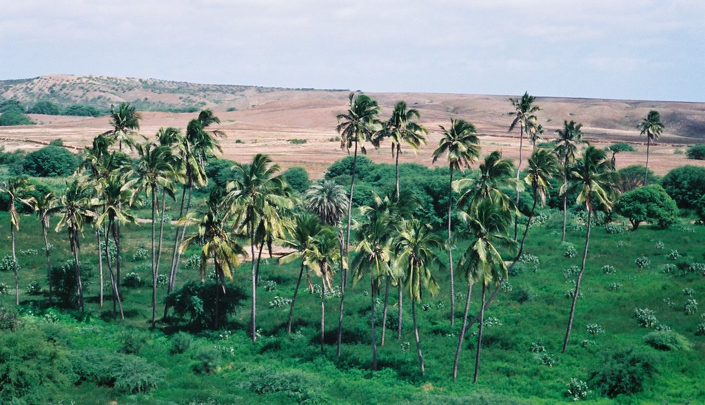 Oasis, Island of Maio, Cape Verde