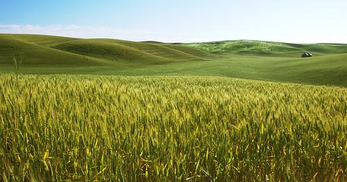 fieldscape | by vsz