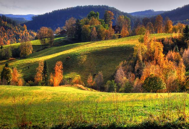 Autumn Buaasen