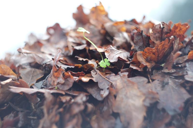 agromando nas follas