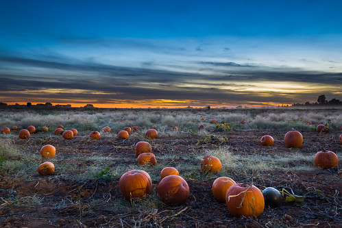 pumpkin pumpkins bishopspumpkinfarm evening sunset pumpkinpatch harvest halloween october grimeshome davidgrimesphotography davidgrimesphotographer grimeshomephotography