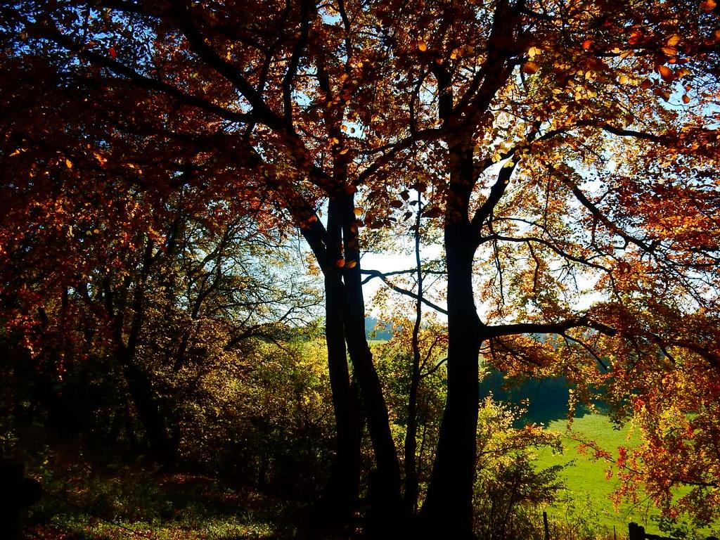 field through trees Little Kimble to Saunderton