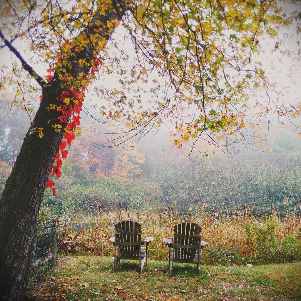 Misty fall day by the pond