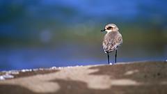 а birds_093