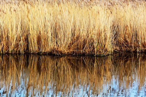 The Soft Reed Reflection
