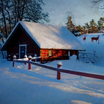 Winter scene FF