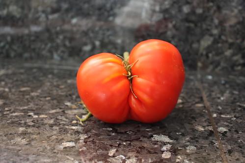 如果水果的圓尖美醜確實不會影響到美味和食用安全,人們對水果的認知有可能不再從視覺、規格定義嗎?圖片來源:Prizmatic(CC BY-NC 2.0) | by TEIA - 台灣環境資訊協會