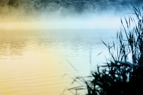 morning trees plants mist cold reflection water colors grass silhouette fog sunrise river bokeh shoreline surface september foxriver riverbank effect blending thegalaxy gradienttool