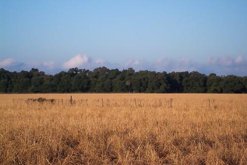 field rural unitedstates country alabama foley baldwincounty magnoliasprings ilobsterit