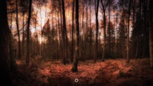autumn canon colours fall forest landscape leefilters light longexposure nature perthshire scotland sunset trees woodland