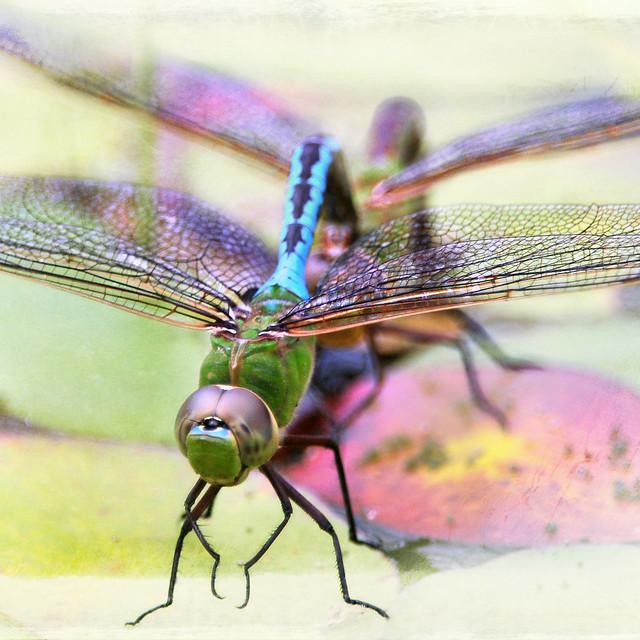 d'fly delight . . .