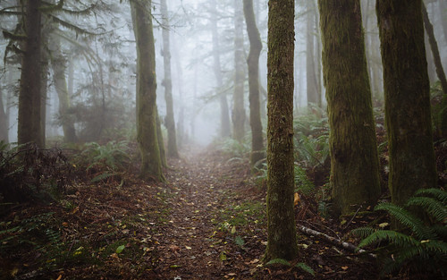 forest trees trail path fog foggy depthoffield issaquah tigermountain pacificnorthwest canoneos5dmarkiii sigma35mmf14dghsmart johnwestrock washington wallpaper background