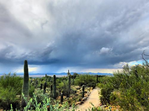 Arizona-Sonora Museum HDR 02-20161103
