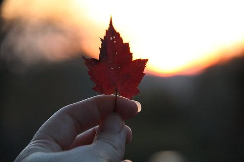 leaf maple hand backlight sunrise red light sun october indiana hanovercollege