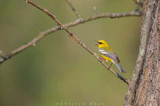 In the woods | by Khurram Khan...