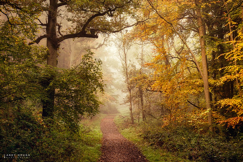 wood autumn trees england mist colour woodland unitedkingdom path sony gb autumnal dorchester a99 sonyalpha andyhough slta99v littlewittenhamwood andyhoughphotography