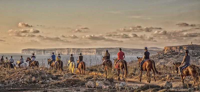 Horses at Ghajn Znuber, Malta, 2016