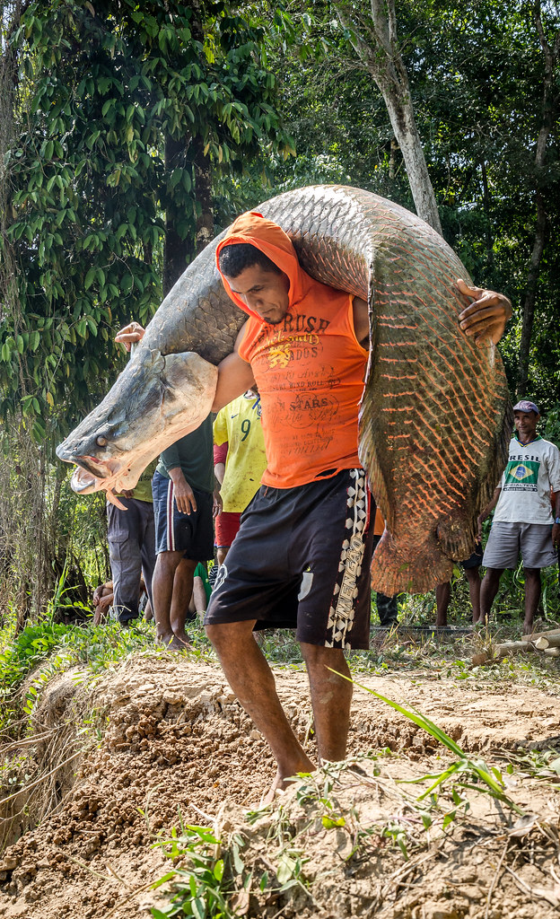 Arapaima Gigas Pirarucu Community Based Management