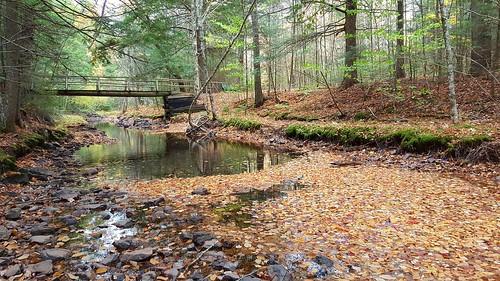 victoriapark lepperbrook novascotia canada autumn autumncolors fall fallenleaves water bridge forest woods samsunggalaxys6edge