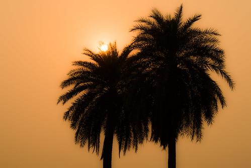 trees sunset orange india silhouette warm glow delhi