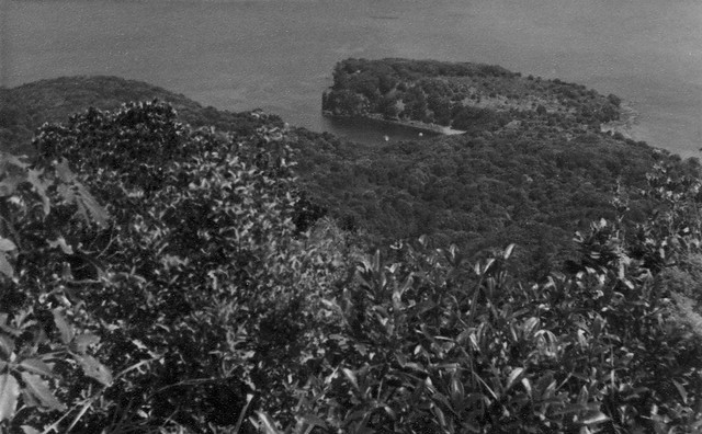 View from the top of Mayor Island towards the harbour 1961