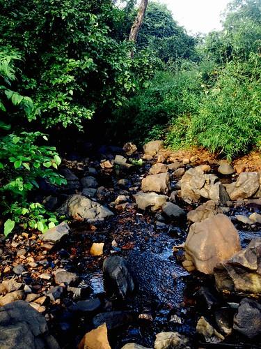 india nature photography mumbai naturephotography sanjaygandhinationalpark flickrsbest iphoneography