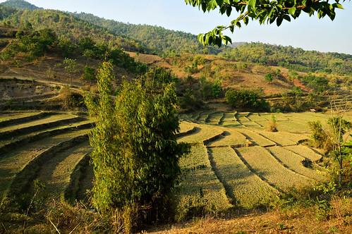 nikon d70 burma birmanie myanmar asia asie southeastasia asiedusudest shanstate landscape paysage outdoors outdoor field agriculture culture pascalboegli