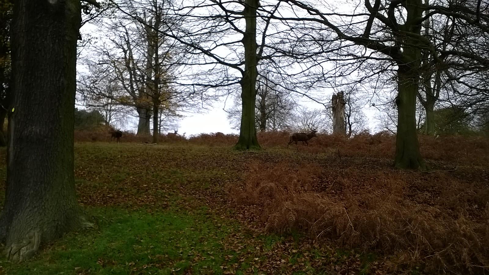 Deer among the trees Richmond Park