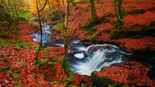 touch glen burn waterfall autumn beech leaves campsie fells scotland trees woods ferns