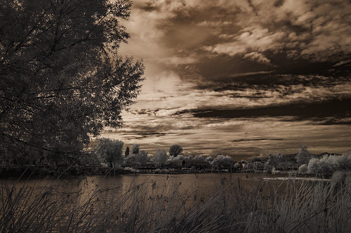 ir infrared infraredphotography convertedinfraredcamera lindolake clouds sky trees highcontrast nature naturalbeauty surreal