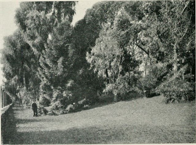 """Image from page 113 of """"El Jardín botánico de Buenos Aires"""" (1910)"""
