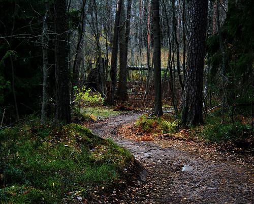 kruunuvuori finland helsinki forest path wilderness winding trees nature natural moss gravel
