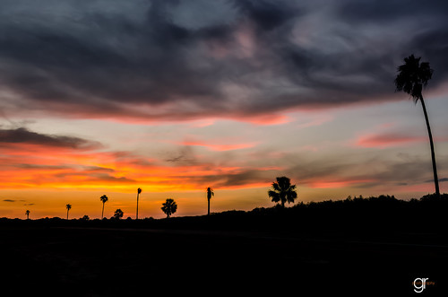 trees sunset sky orange cloud sun nature beautiful field silhouette clouds palms landscape outdoors texas outdoor dusk horizon orangesky goldenhour brownsville southtexas ruralroad inthesky