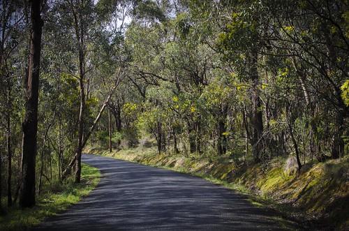 road trees winter sunshine weather yellow landscape bush nikon australia melbourne victoria lane vic acacia wattle warrandyte wattles d5100 nikond5100 phunnyfotos southwarrandyte