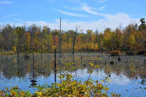 blue autumn lake fall heron pond great upstateny fingerlakes