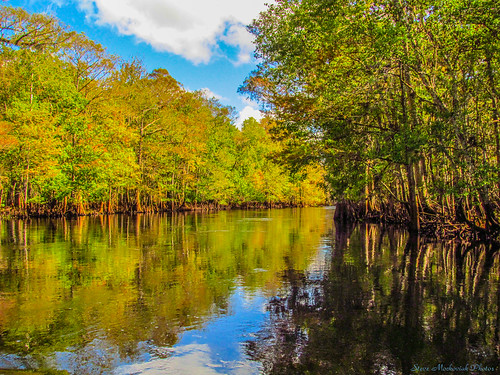 autumn trees fall water canon reflections river florida fallcolors powershot foliage withlacoochie sx150is smack53