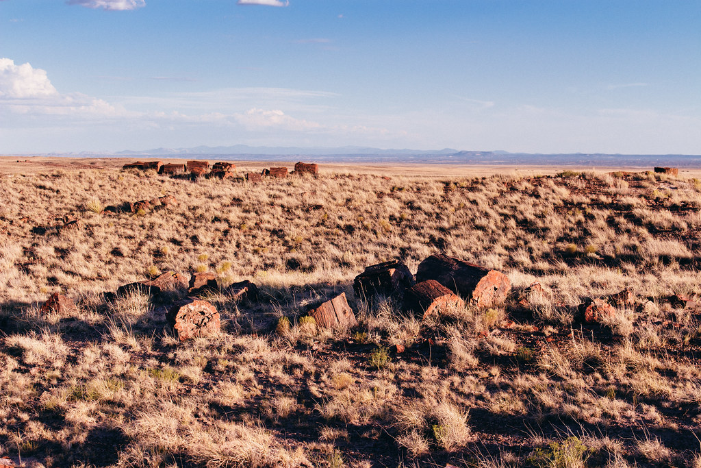 Chunks of petrified wood lie in grasslands with mountains in the distance
