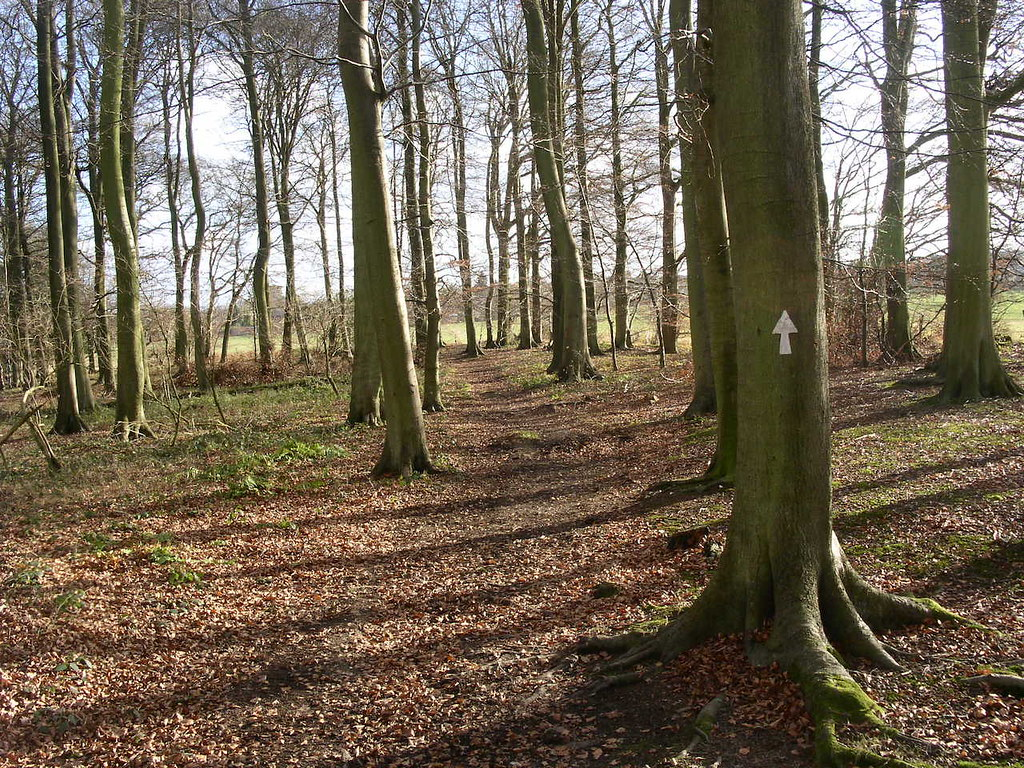 Woods near Bix winter Henley via Stonor walk