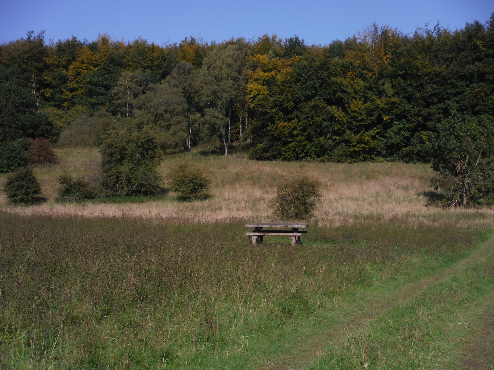 Bench on Clearing in Hursley Bottom SWC Walk 255 Pewsey or Marlborough Circular via Avebury