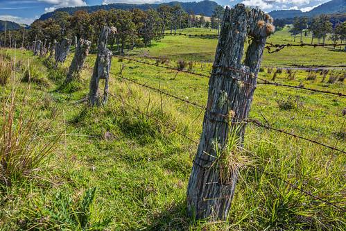 fence landscape moss barbedwire weathered lichen paddock fenceposts hff scenicrim condamine whiteswamp postrail nswqldborder