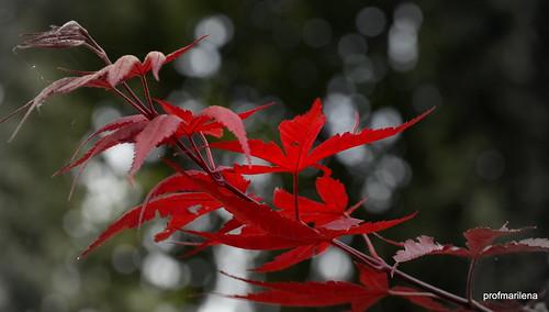 1-DSC_7709 red in the wind