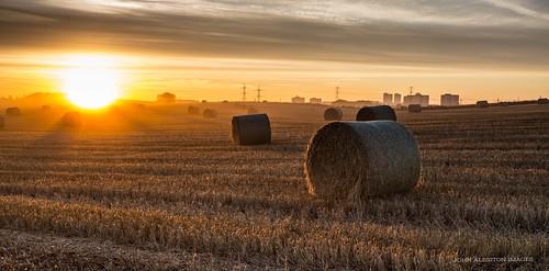 autumn mist rural sunrise scotland farming highrises haybales northglasgow gradfilter lambhill autumnmist lochfauld miltonhighflats