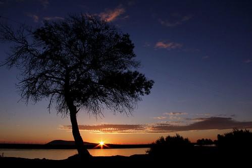 northerncalifornia sunrise dawn wetlands mytree solanocounty suisunmarsh montezumaslough