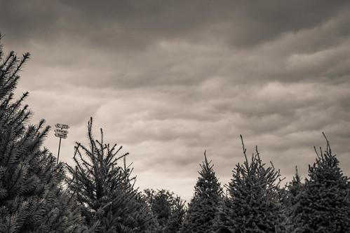 santaswoods bonfire hayrackride blackandwhite pine bw trees 2016 fir sign clouds blair nebraska unitedstates us