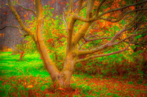 abstract canada fall grimsby landscape niagaraescarpmen ontario tree autumn colour colours coloursniagara fallenleaves fog forest forestfloor gnarly nature niagara ortbaldauf ortwin photography saturated