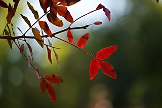 Autumn Stillness | by Heather's Reflections Photography