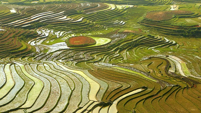 When rice terrasses are Earth's finest mosaic