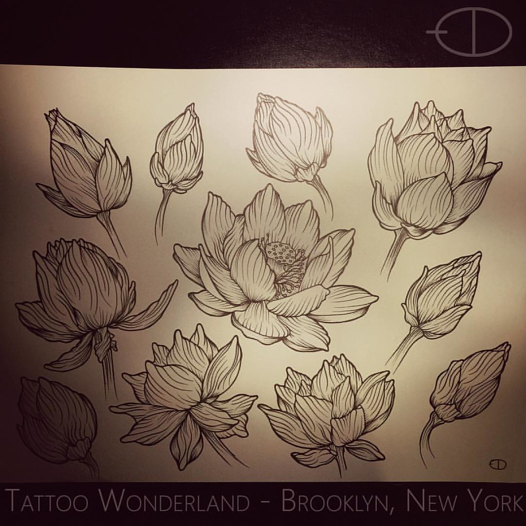 Danleytattoos A Study Of Lotus Flowers For A Tattoo F Flickr